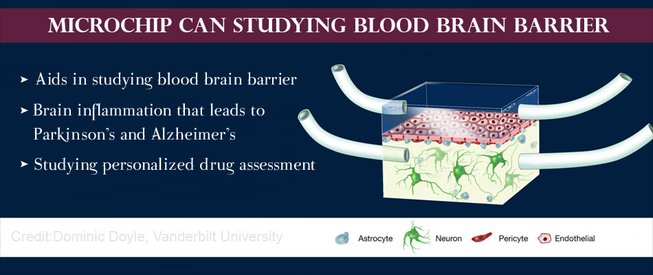 Blood-Brain Barrier on a Chip