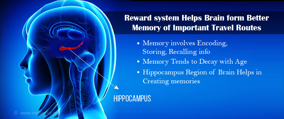 Reward System Helps Brain Remember Routes Better