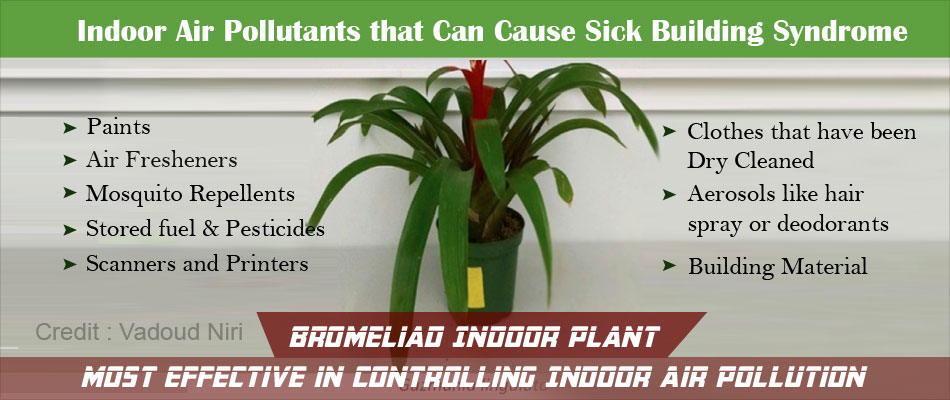 Select the Right Indoor Plants and Avoid Sick Building Syndrome