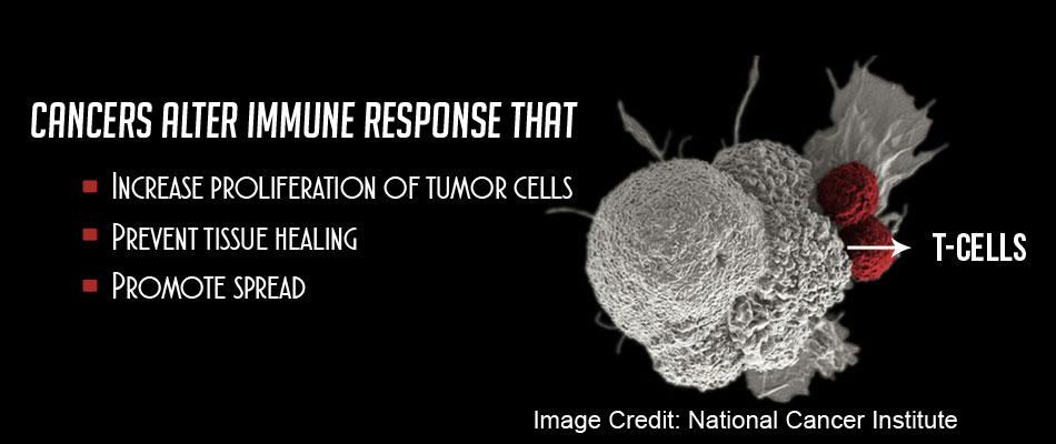Boost to Immunotherapy by Switching Off Immunosuppression in Cancer, Crohn's and Alzheimer's