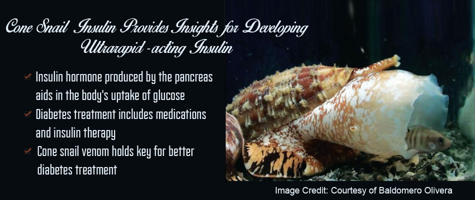 Cone Snail Provides Clues for Developing Ultrarapid-acting Insulin