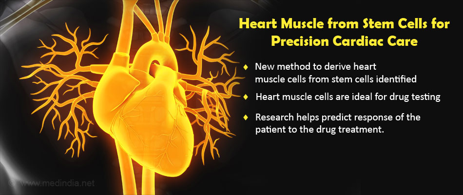 Heart Muscles from Stem Cells Promise Precision Cardiac Care