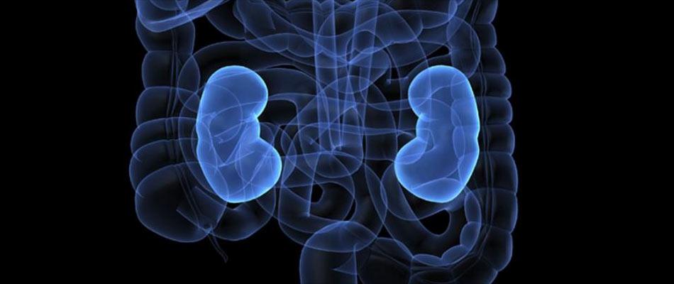 Advice to Kidney Patients Undergoing Dialysis