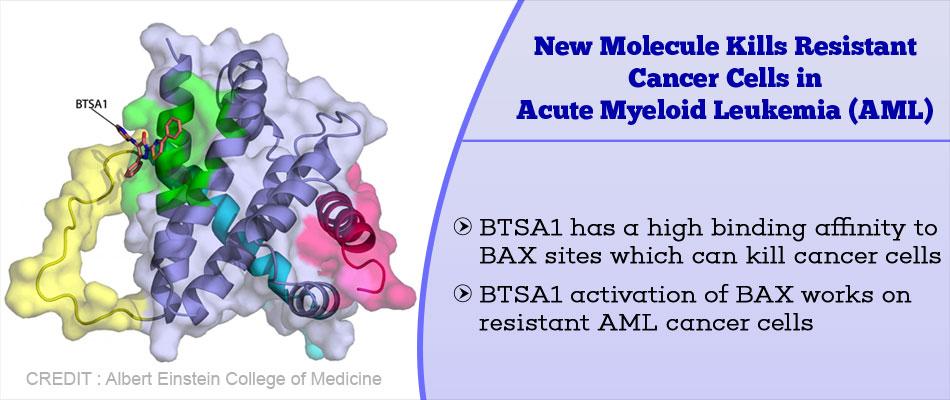 New Molecule Kills Resistant Cancer Cells in Acute Myeloid Leukemia