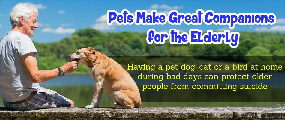Pets can Save Older People from Attempting Suicide