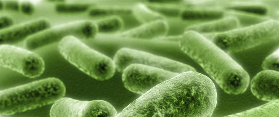 Probiotics may Help Prevent Osteoporosis