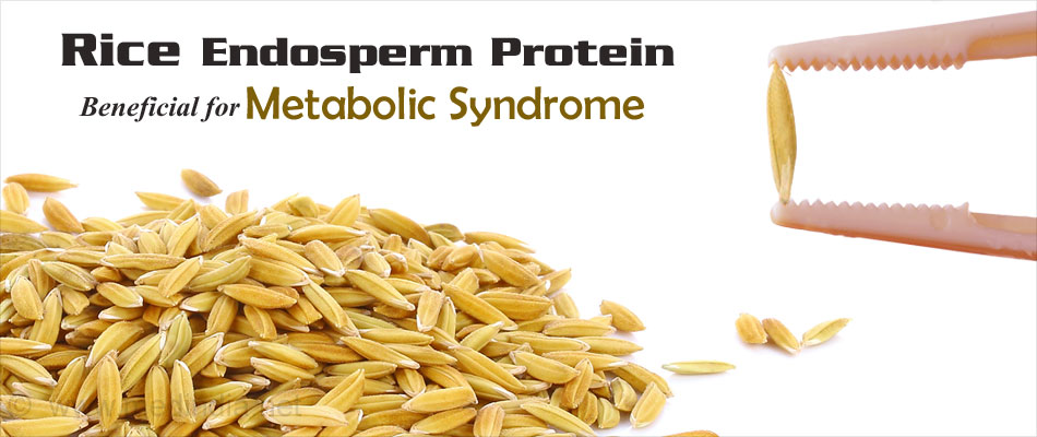 Rice Endosperm Protein Beneficial for Metabolic Syndrome