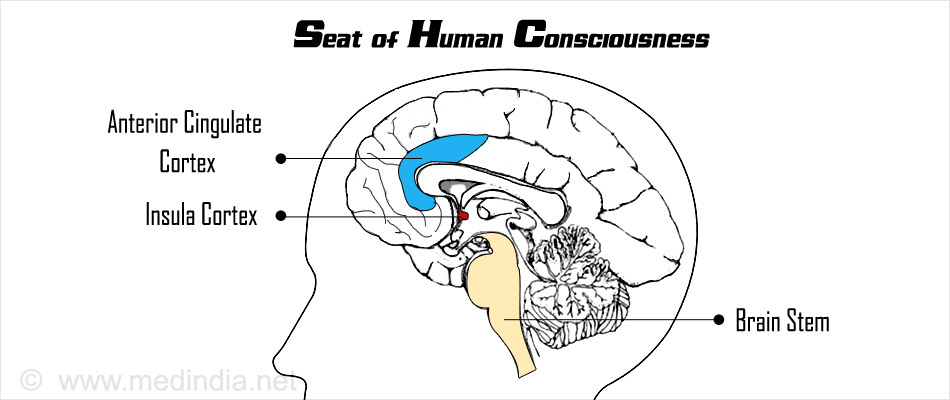 Seat of Human Consciousness may Originate in the Brain Stem Region of the Brain