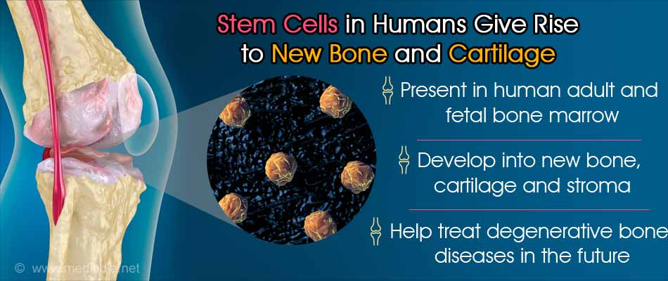 Stem Cells Isolated for the First Time in Humans