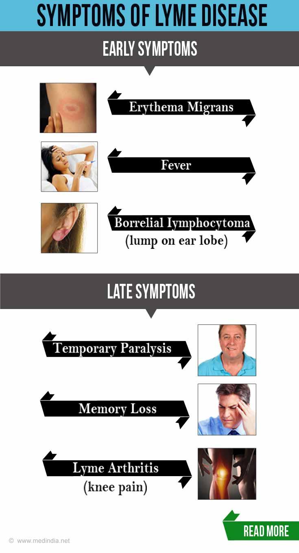 Lyme Disease: Fresh Insights