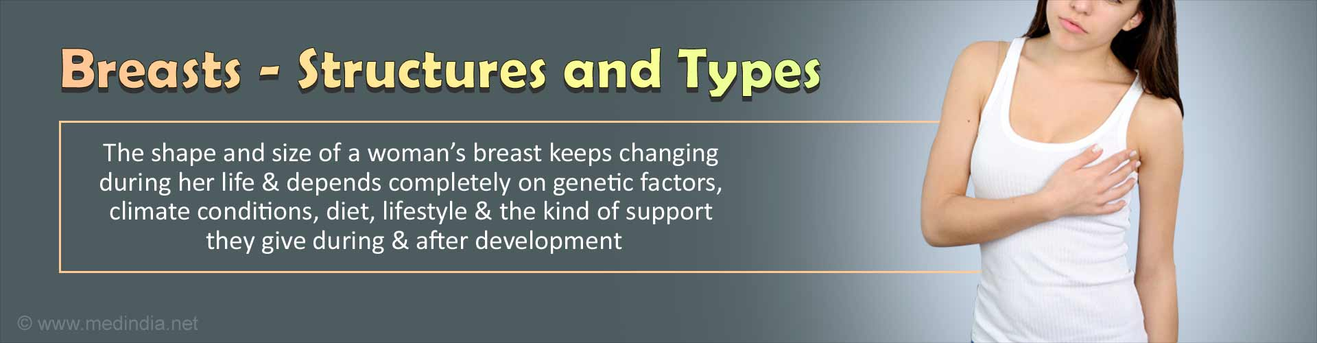 Breasts - Structures and Types