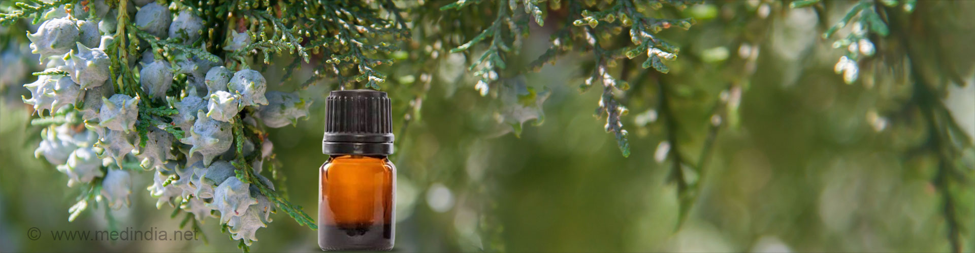 Top 8 Health Benefits of Cypress Oil