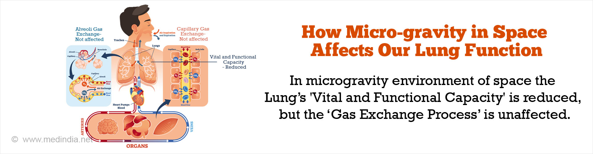 How Micro-gravity in Space Affects Our Lung Function