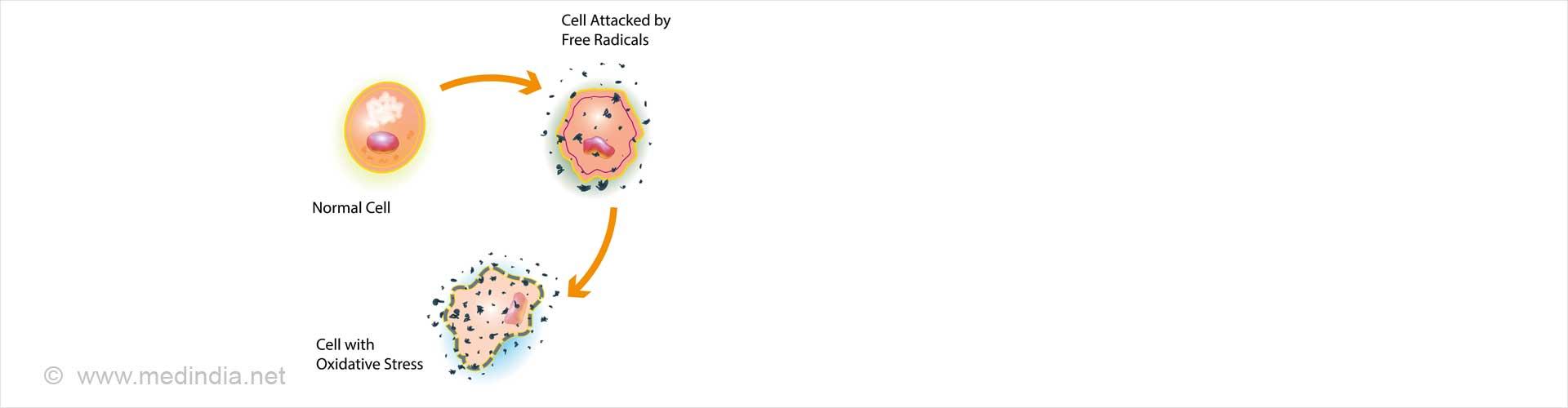 Oxidative Stress / Free Radicals Cell Injury
