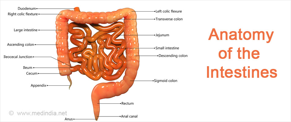 Short Bowel Syndrome Causes Symptoms Complications Diagnosis