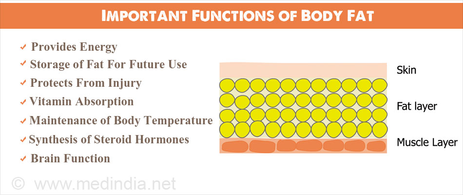 Important Functions of Body Fat