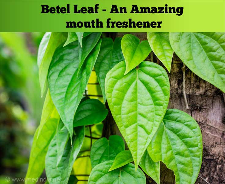 Medicinal Benefits of Betel Leaves