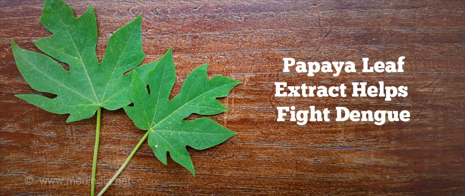 Papaya Leaves Help Cure Dengue