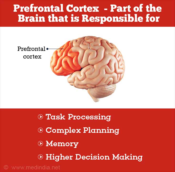 Prefrontal Cortex is Responsible for Task Processing