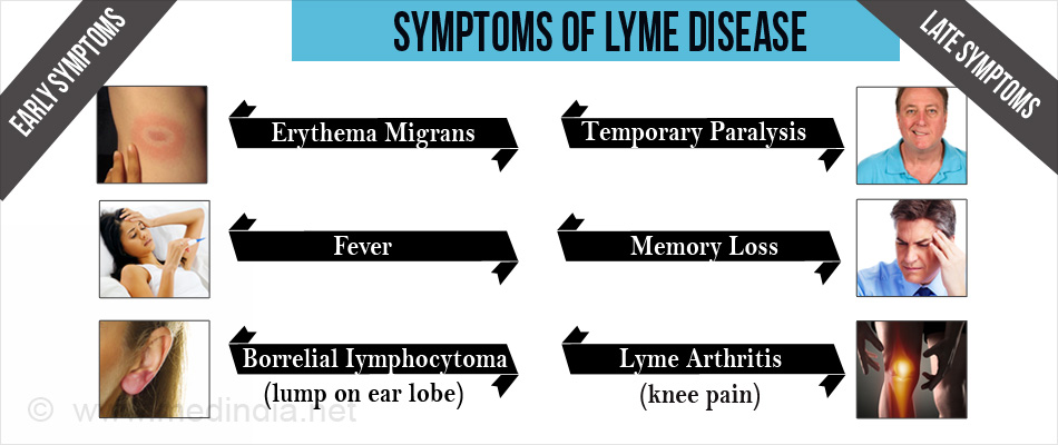 Early & Late Symptoms of Lyme Disease