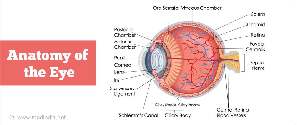 Eye anatomy anterior chamber