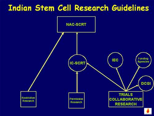 Should embryonic stem cell research be allowed
