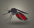 Malaria - Protection Strategies