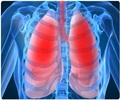 Chronic Obstructive Pulmonary Disease / COPD