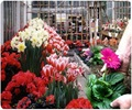Gardening and Horticultural Therapy for the Young and the Old