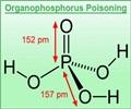 Organophosphorus Poisoning