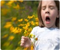 Dealing with Pollen Allergy - About
