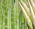 Bamboo: A Storehouse of Health Benefits