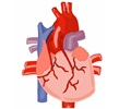 Coronary Artery Bypass Graft (CABG) Surgical Procedure