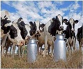 Cow's Milk-rBGH: recombinant bovine growth hormone