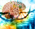 Genes may Guide Intelligence throughout Life