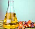 Palm oil: Incredibly Health Promoting Oil