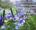 Health Benefits of Rosemary Herb