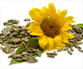 Top 5 Health Benefits of Sunflower Seeds