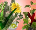 Herbs for Weight Loss: Pros and Cons