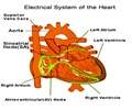 Atrial and Junctional Arrhythmias