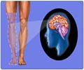 Phantom Limb Syndrome - Latest Publication and Research
