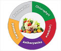 How Phytonutrients Work in the Body