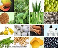 Natural Remedies to Treat Diabetes