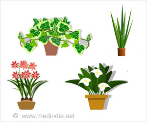 Top 10 Air Purifying Plants Name Purifying Houseplants on tall houseplants, tropical houseplants, indoor houseplants, cactus houseplants,