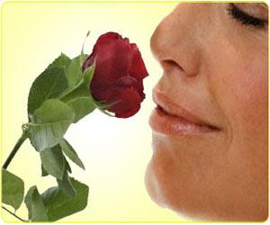 Anosmia / Loss Of Smell