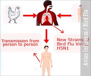 Avian Influenza / Bird Flu