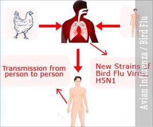 Avian Influenza / Bird Flu
