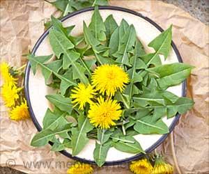 Health Benefits of Dandelion Plant