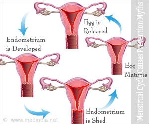 Menstrual Cycle Phases Mechanism Causes Prevention