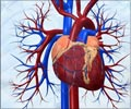 Quiz on Healthy Heart